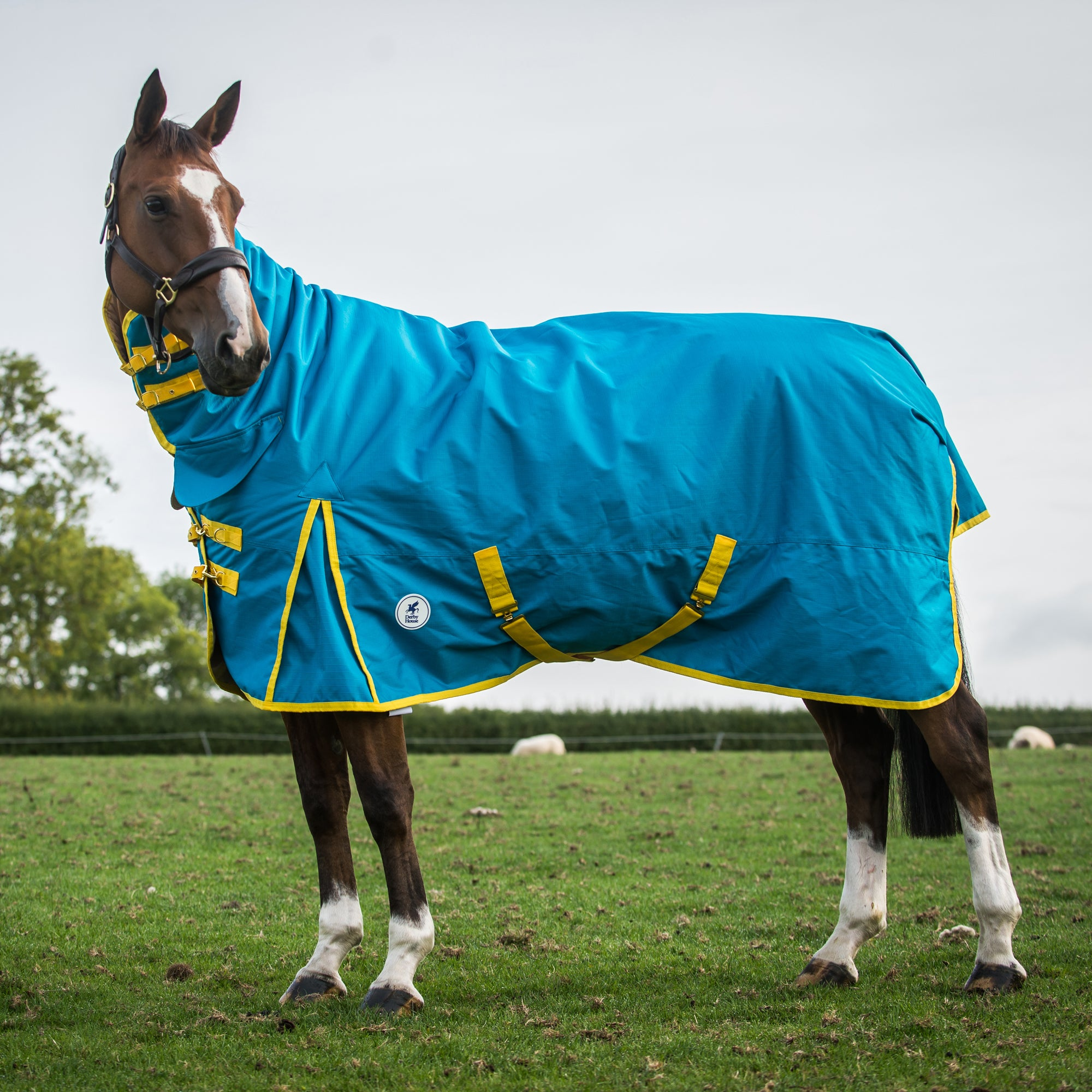 Lightweight Combo Horse Freesia Turnout House