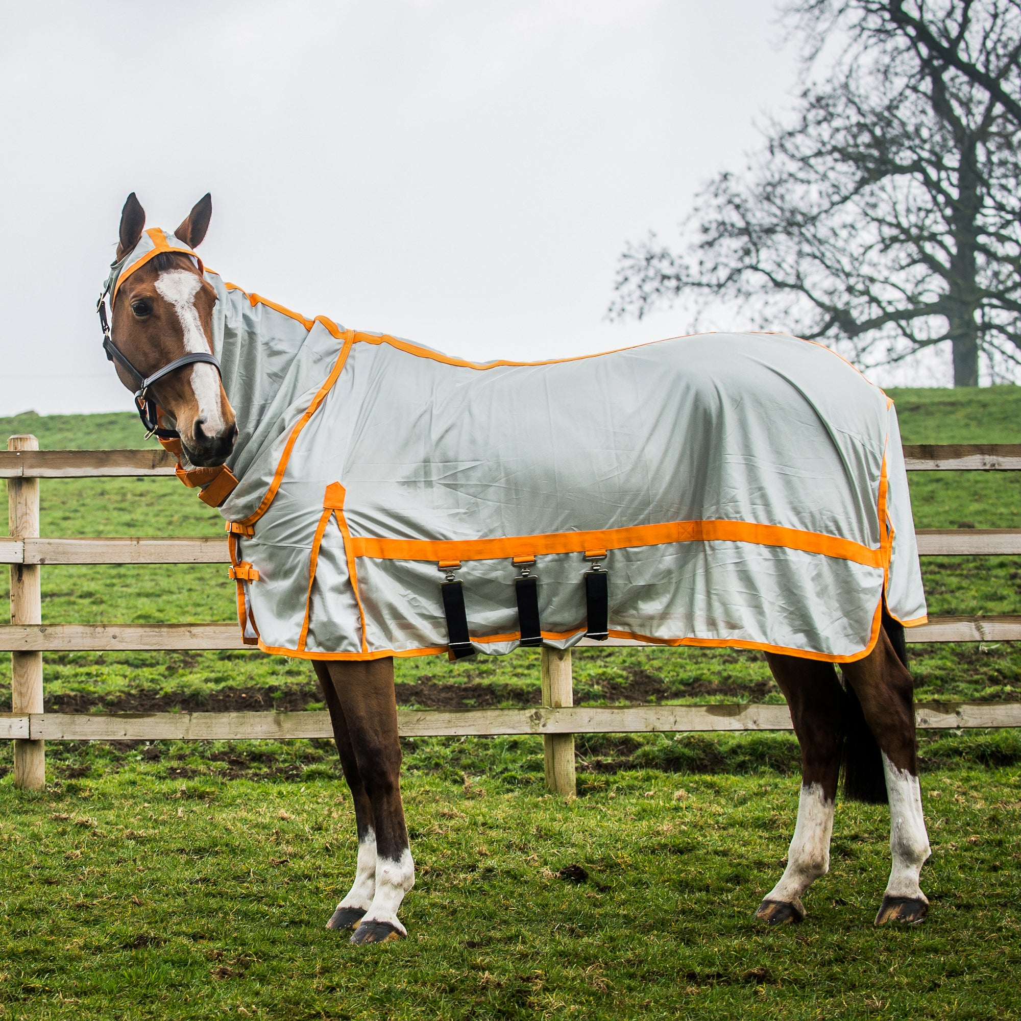 White Red All Sizes Horse Rugs Sheets Derby House Clic
