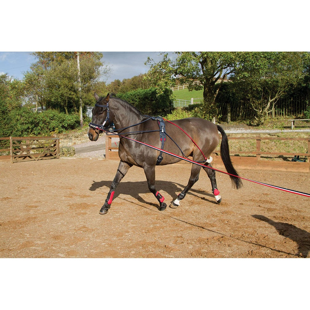 John Whitaker Training Rein Bungee One Size Black Or Brown Xmas
