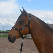 Derby House Pro Leadrope and Head Collar