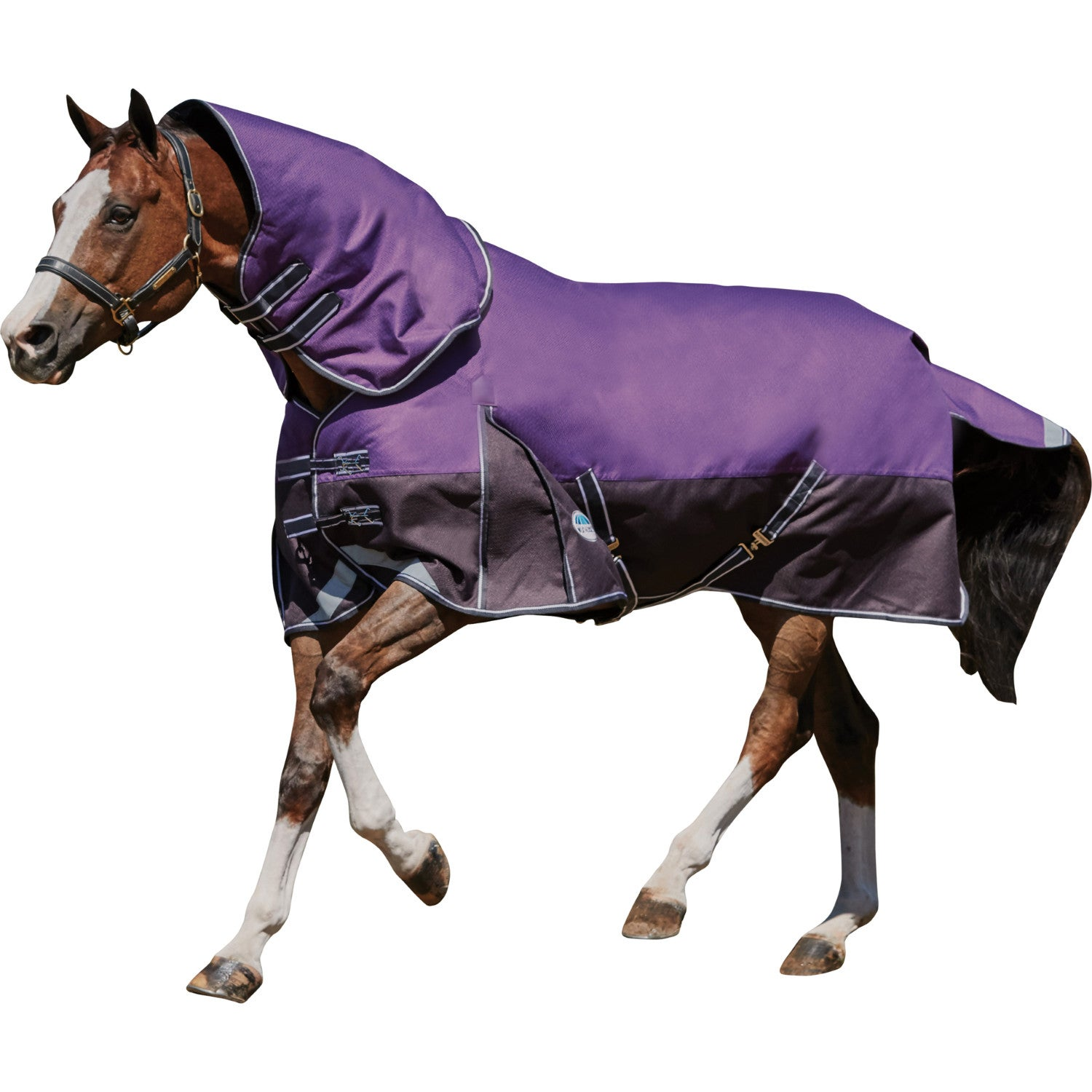 Weatherbeeta Comfitec Plus Dynamic Detach A Neck Medium Lite Turnout Rug Available From Derbyhouse