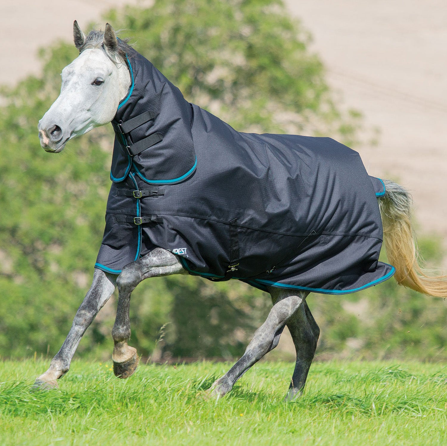 Air Motion Turnout Rug Red White