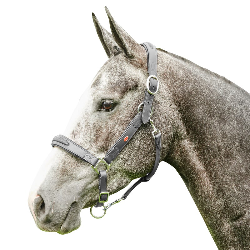 John Whitaker Chicago Perforated Head Collar