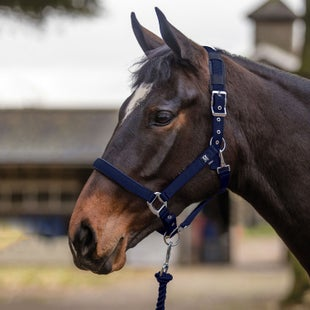 Mark Todd Deluxe Padded Headcollar And Leadropes Navy