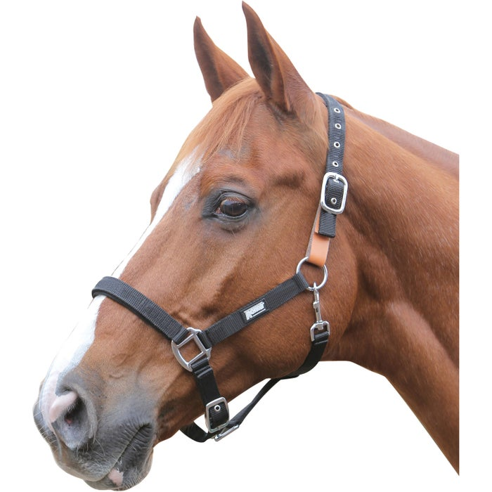 Roma Breakaway II Head Collar